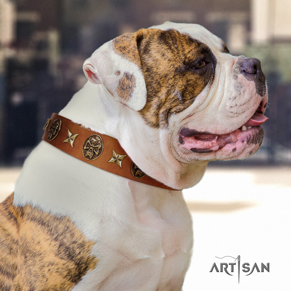 American Bulldog unusual leather dog collar for everyday walking