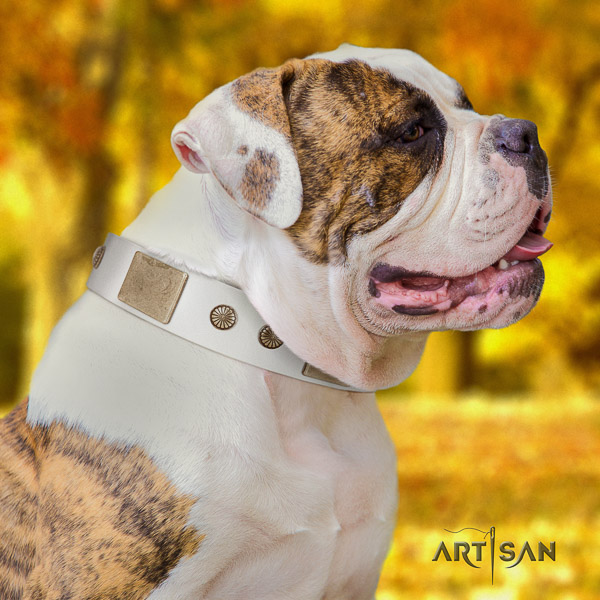 American Bulldog fancy walking genuine leather collar with unusual decorations for your four-legged friend
