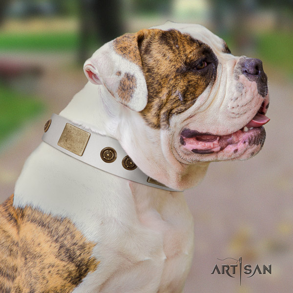 American Bulldog daily use full grain leather collar with incredible studs for your four-legged friend