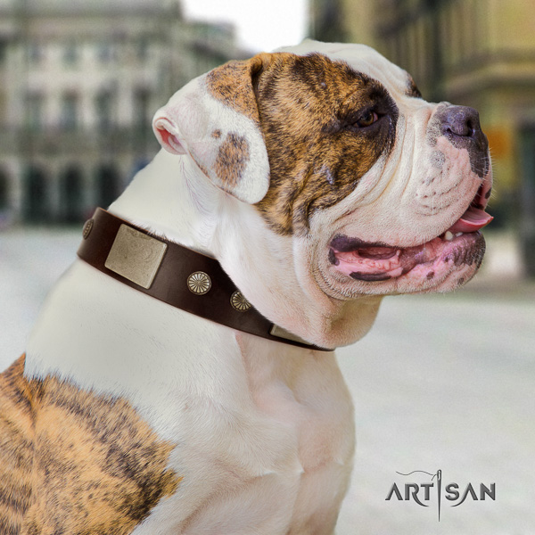 American Bulldog easy wearing leather collar with impressive decorations for your pet
