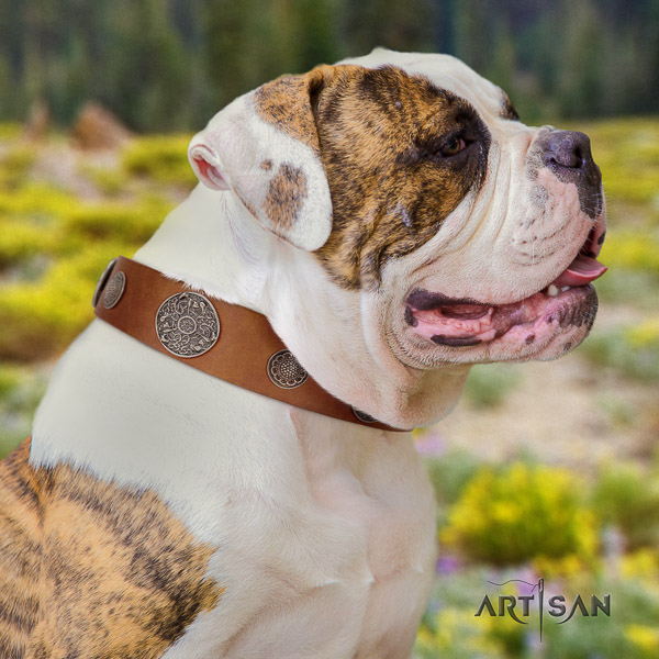 American Bulldog designer genuine leather dog collar for stylish walking