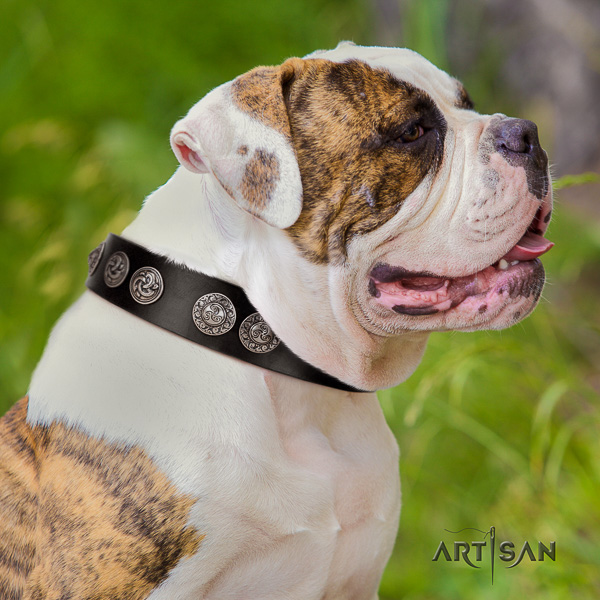 American Bulldog awesome full grain natural leather dog collar for comfy wearing