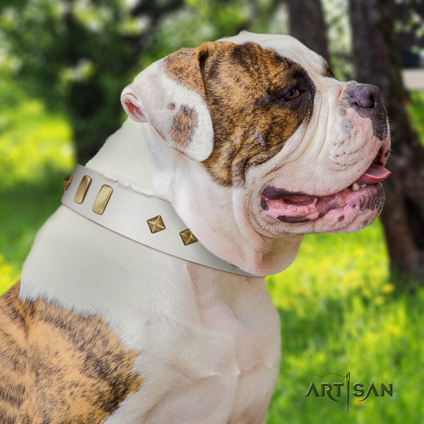 American Bulldog perfect fit leather dog collar for everyday walking