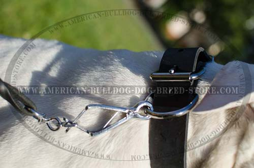 Fashion Leather Dog Collar with Strong Buckle
