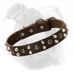 Bulldog Leather Collar Decorated with Beautiful Studs