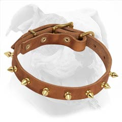 American Bulldog Tan Leather Collar with Brass Spikes