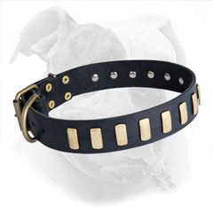 Designer Leather Collar for American Bulldogs