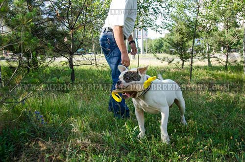 Leather Collar for American Bulldogs