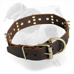Comfortable American Bulldog Walking with Spiked Leather Collar