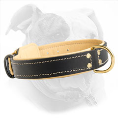 Softly Padded Leather Collar for Bulldogs
