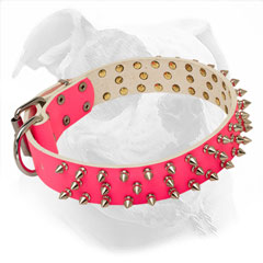 Leather American Bulldog Collar with Nickel Spikes