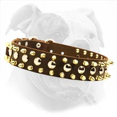 Leather American Bulldog Collar with Goldish Spikes and Studs