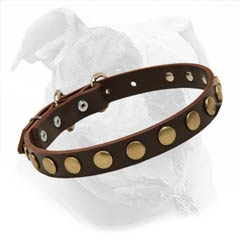 Designer Studded Leather Collar for American Bulldogs