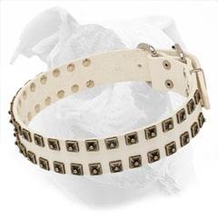 Studded Leather Collar for American Bulldogs