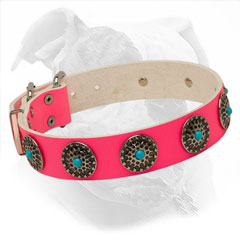 Fashionable Collar for She-Dogs