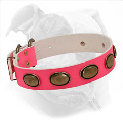American Bulldog Pink Leather Collar with Brass Oval Plates