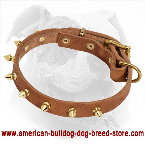 american bulldog collars buy brass spiked leather american bulldog collar for walking 6563