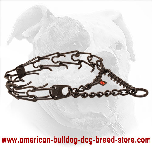 Solid Black Metal Collar for American Bulldog