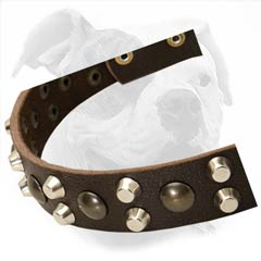Excellent Quality Buckle Collar for Walking Your Bulldog