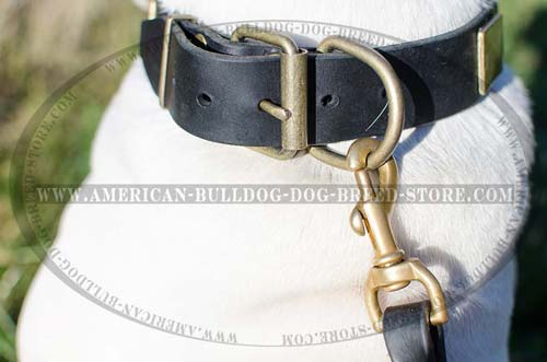 Brass D-ring for Leash Attachment