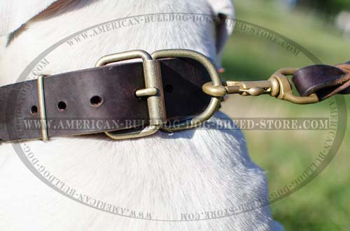 Large Ring for Leash Hook Up