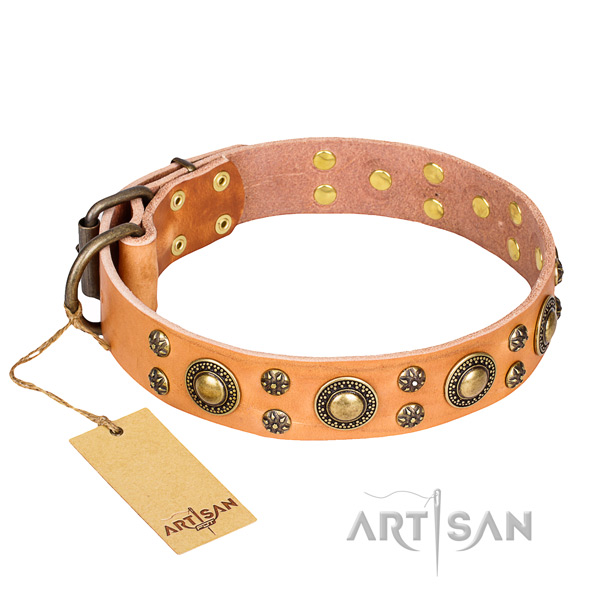 Significant full grain leather dog collar for daily use