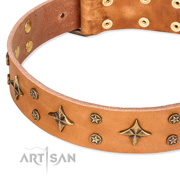 Full grain genuine leather dog collar with extraordinary embellishments