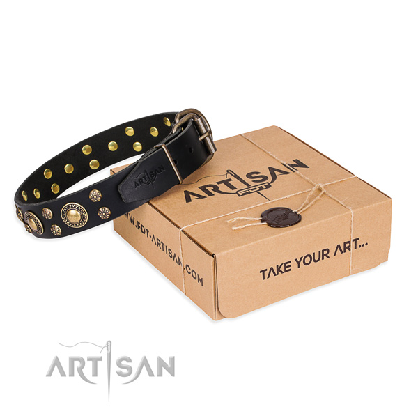 Top notch full grain natural leather dog collar for stylish walks