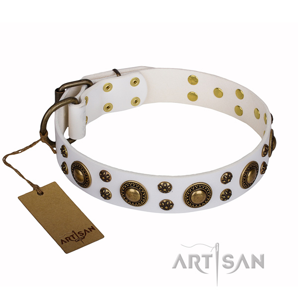 Everyday walking full grain leather collar with embellishments for your dog