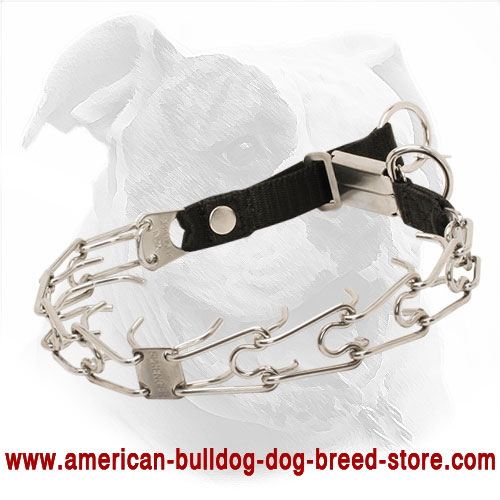 Pinch American Bulldog Collar