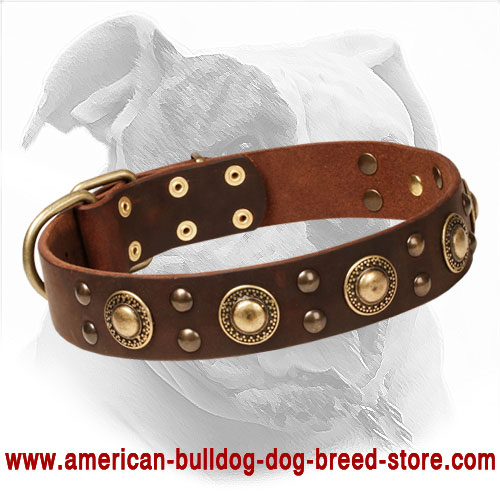 Leather American Bulldog Collar Decorated with Circles