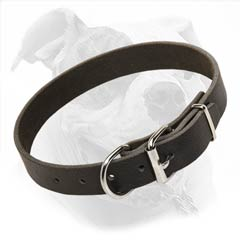 Leather Collar for walking and training American Bulldog