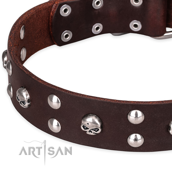 Everyday leather dog collar with exceptional adornments