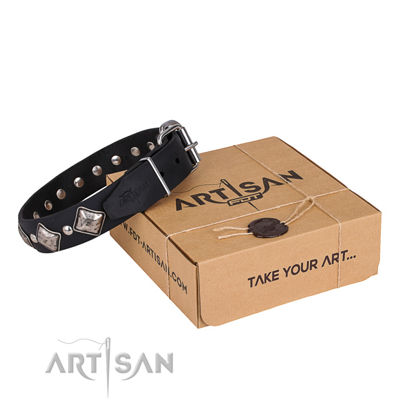 Day-to-day leather dog collar with fashionable embellishments