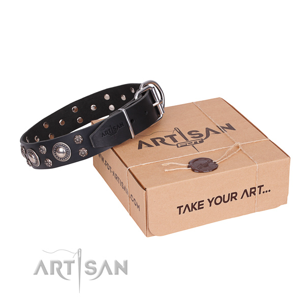 Daily leather dog collar with stunning adornments