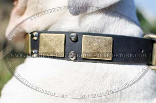 Quality Leather Collar for Stylish Walking