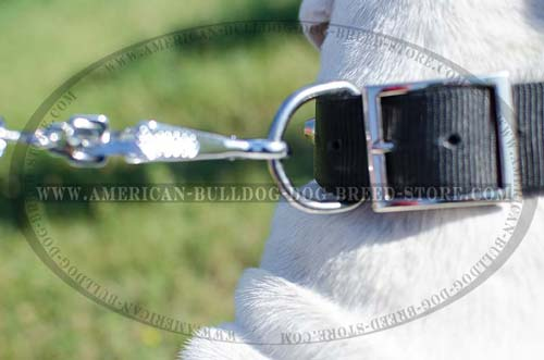 Strong Corrosion Resistant Ring for Leash Attachment