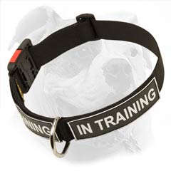 Nylon collar with easy quick release buckle