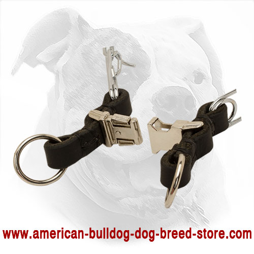 Adjustable Metal American Bulldog Collar