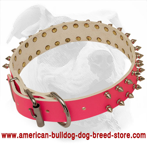 Riveted Pink  Leather American Bulldog Collar