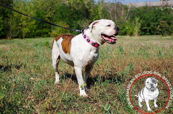 Extraordinary Design  Pink Leather Collar for American Bulldog
