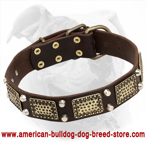 Leather American Bulldog Collar