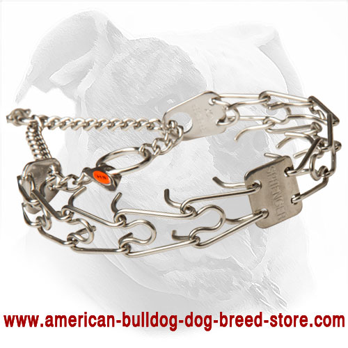Training Pinch American Bulldog Collar