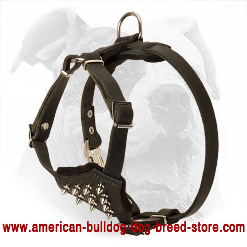 American Bulldog Puppy Harness Made of Leather