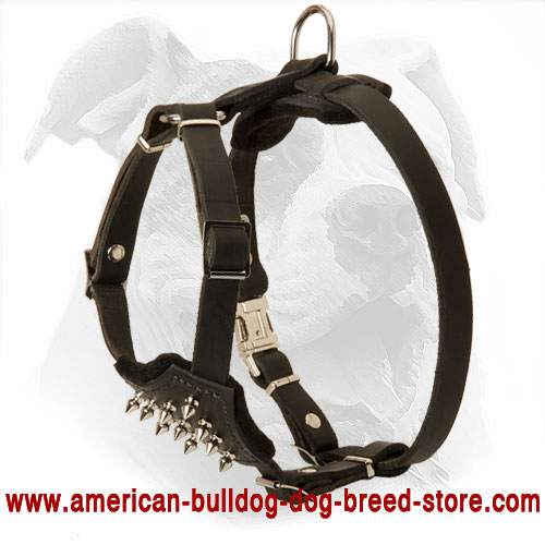 Leather Puppy Harness for American Bulldog