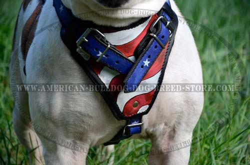Patriotic Bully harness
