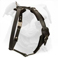 The harness is super easy to fit on your American Bulldog by means of click lock buckle