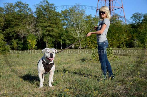 Safe agitation work American Bulldog harness