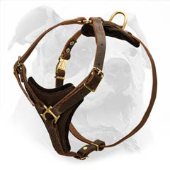 American Bulldog leather harness