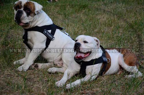Bulldog maxi-comfort nylon harness